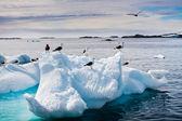 Seagulls in Antarctica — Stock Photo