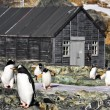Penguins in Antarctica — Stockfoto #5947339