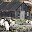 Penguins in Antarctica — Stock fotografie #5947339