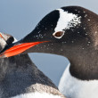 Foto Stock: Two penguins in Antarctica