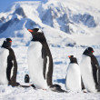 pinguins na Antártida — Foto Stock