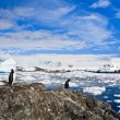 Penguins in Antarctica — Foto de Stock