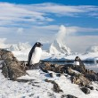Two penguins dreaming — Stock Photo #5947944