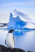 Penguin on the rocks — Foto Stock