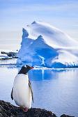 Pinguin auf den felsen — Stockfoto