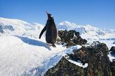 Penguin on the rocks — Stockfoto