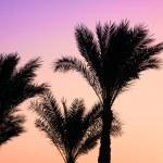 Silhouette palm tree — Stock Photo