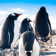 Penguins  on a rock — Foto Stock