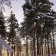 Stock Photo: Sunrise in the winter forest