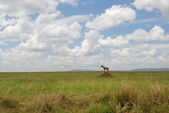 African savannah — Stock Photo