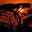 Stock Photo: Africsunset