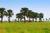 Traditional African village — Stock Photo