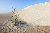 Sand and dry plant — Stock Photo