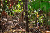 Jungle trip — Stock Photo
