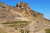 Plantation of coffee, Yemen — Stock Photo