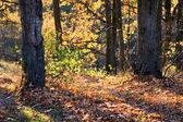 Forêt en octobre — Photo