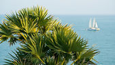 Palm and sailing boat — Stock Photo