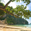 Hammock on the beach — Stock Photo