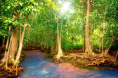 Mangroves — Stock Photo