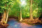 Mangroves — ストック写真
