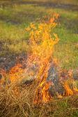 Burning dry grass — Stock Photo