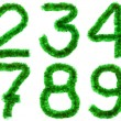 Stock Photo: Green digits