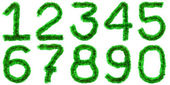 Green digits — Stock Photo