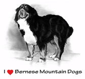 I Love (Heart) Bernese Mountain Dogs, Pencil Drawing — Stock Photo