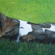 Pastel Painting of Holstein Cow Lying in Sunshine — Stock Photo