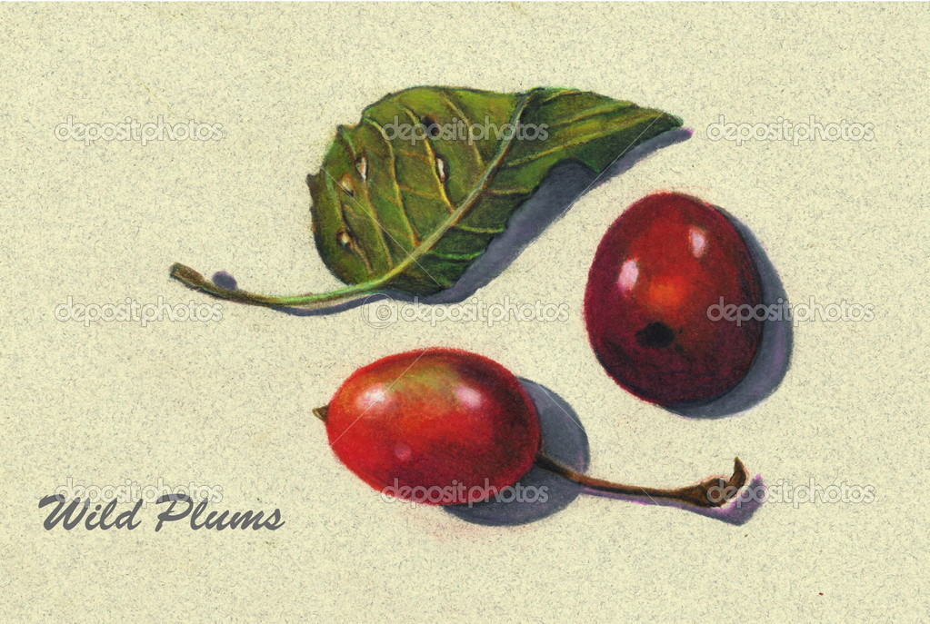 Pinterest Still Life Drawing a Color Pencil Drawing of Two