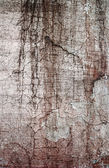 Grunge cement background — Stock Photo