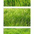 Green grass set — Foto Stock