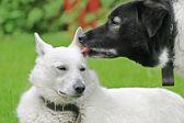 Dogs love — Stock Photo