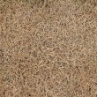 Dry grass - Foto Stock