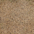Dry grass - Stock Photo