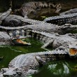 Crocodiles in the water — Stock Photo