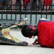 Foto Stock: Crocodile show