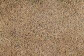 Trockenes gras — Stockfoto