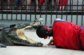 Crocodile show — Stockfoto