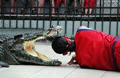 鳄鱼表演 — 图库照片