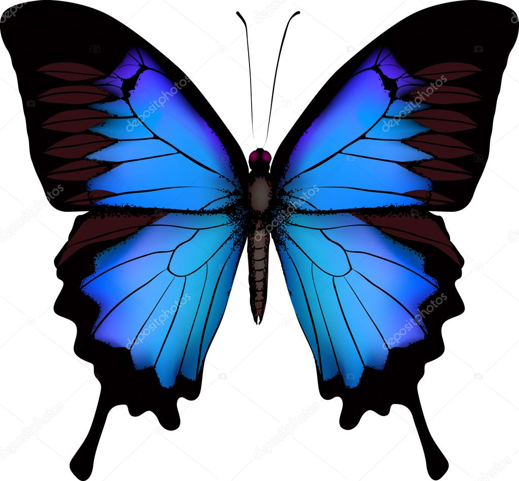 Blue butterfly papilio ulysses (Mountain Swallowtail) isolated vector on white background — ベクター素材ストック #6177421