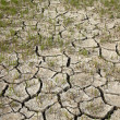 Cracked soil in dry season — Stock Photo