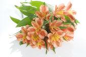Beautiful holiday flowers — Stock Photo