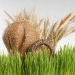 Basket with grain bread and cereals behind spring green grass. — Stock Photo