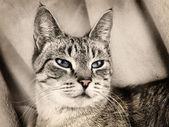 Gato sobre beige — Foto de Stock