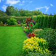 Summer flower garden — Stock Photo