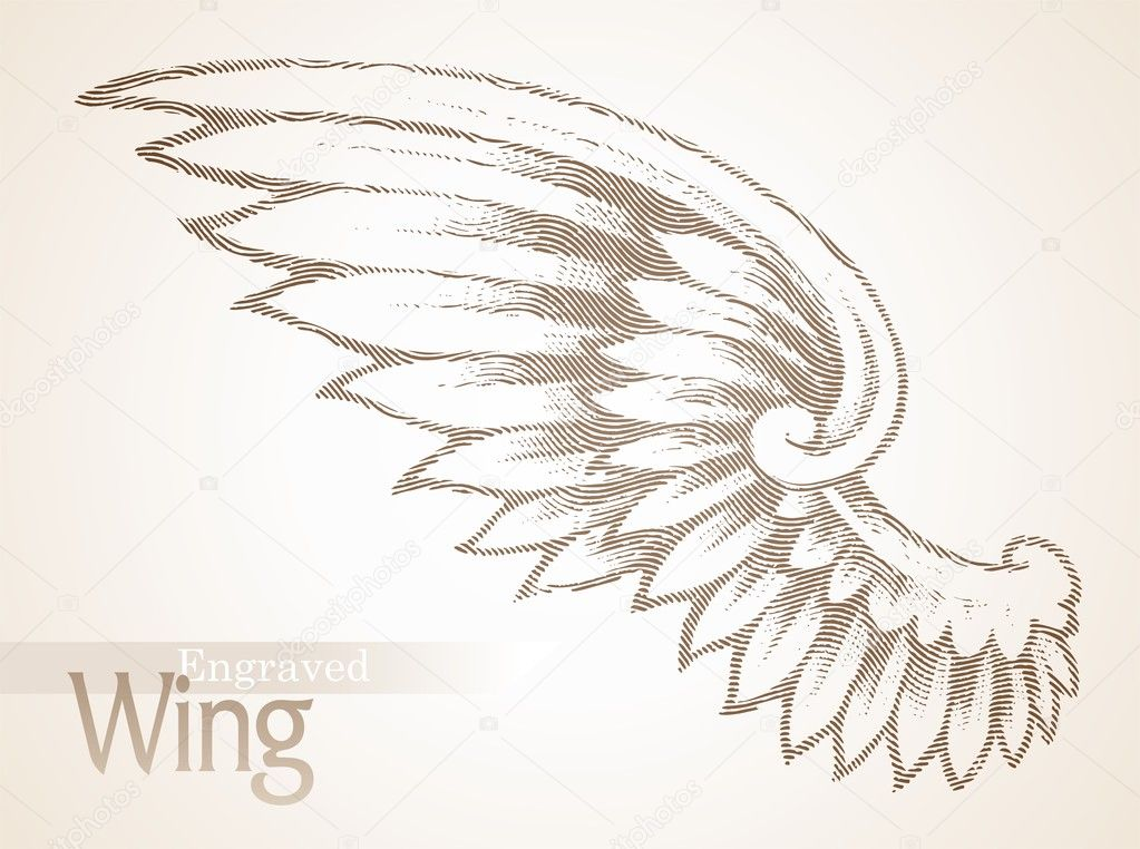 Vector engraved ornate wing — Stock Vector #5409110