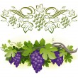 Ripe grapes on the vine & decorarative calligraphic vine — Stock Vector