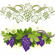 Stock Vector: Ripe grapes on vine & decorarative calligraphic vine