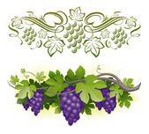 Ripe grapes on the vine & decorarative calligraphic vine — Vector de stock